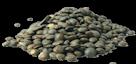 Lentilles (vertes, brunes, blondes, corail ou béluga)